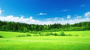 grass and sky backgrounds. Beautiful And Download For Grass And Sky Backgrounds