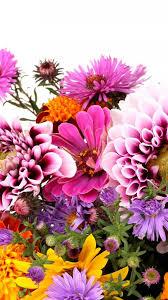 iphone 6 wallpaper floral. Plain Iphone 1242x2208 Flowers Floral Backgrounds For Iphone 6 Wallpaper Floral I
