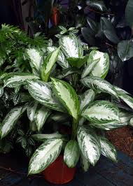 Best Designs Ideas of Low Light Plants Indoor On Bromeliad ~q,dxy Urg,c