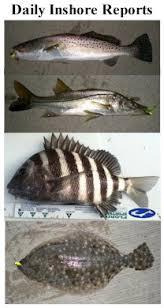 Florida Inshore Saltwater Fish Identification