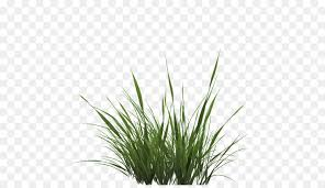 Texture mapping Drawing Lawn Tall Grass Texture Alpha png download