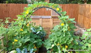 Small Picture Small Vegetable Garden Designs Home Furniture Design