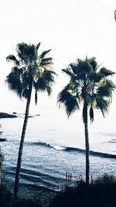 palm trees tumblr. 6 Palm Trees Tumblr