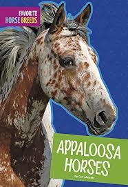 appaloosa horses favorite horse breeds