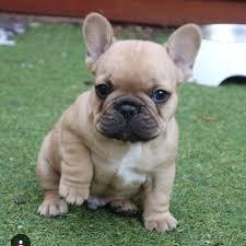 cute baby bulldog. Modren Baby Cute Baby And Baby Bulldog
