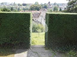 W Nde Und Sichtschutz Wyder Gartenbau