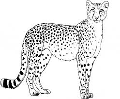 Small Picture Cheetah coloring page Animals Town Animal color sheets Cheetah