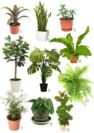 office plants no natural light. delighful office 10 great indoors plants  chosen for their look ability to grow  great indoors intended office no natural light
