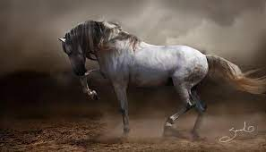 facts about p r e horses