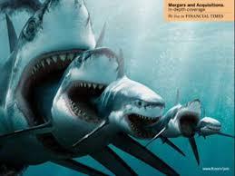 megalodon shark. Wonderful Shark How Many Sharks Are In The Ocean  Wonderopolis With Megalodon Shark