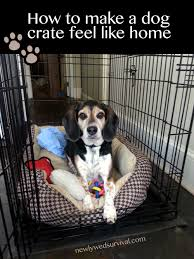 How to make a dog crate Indoor How To Make Dog Crate Feel Like Home cratehappypets ad Newlywed Survival Making Your Dogs Crate Feel Like Home cratehappypets ad petsmart