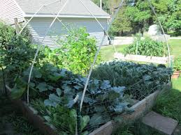 bird netting for garden. image of: i created a pvc pipe frame and covered it with bird netting to for garden