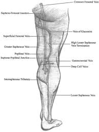 The Impact Of Isolated Lesser Saphenous Vein System