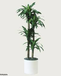 Decorative Indoor Trees Great Indoor Trees Hgtv