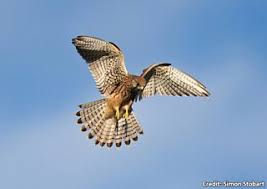 Bbc Blogs Autumnwatch Wing Tips Identifying Our Birds