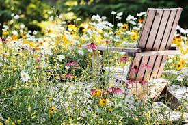 how to plant a mini meadow