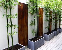 Small Picture 45 best Bamboo tree images on Pinterest Bamboo tree Backyard