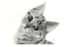 Lusso Disegni Colorati Di Gatti Belli Migliori Pagine Da Colorare