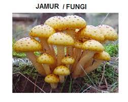 Hasil gambar untuk peran jamur zygomycota
