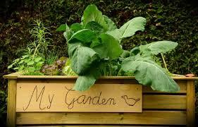 building a garden bed. Build-raised-garden-bed.jpg Building A Garden Bed