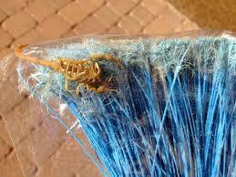 how do you kill a scorpion. Brilliant Scorpion With How Do You Kill A Scorpion