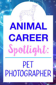 best images about career change employee benefit welcome to my new animal career interview series i ll be sharing interviews