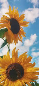 Best Sunflower iPhone 11 HD Wallpapers ...