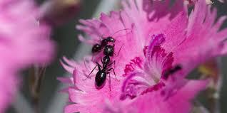 ants in your garden 6 ways to