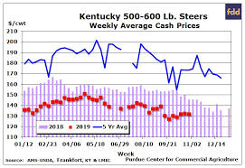 Steer Feeding Chart Livestock Cattle Feeders Place More Heifers On Feed Agfax