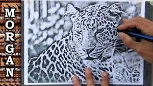 Artists Reference Photos Easy Trace Jason Morgan Wildlife Art