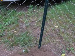 Chicken Wire Fence Ideas A Chicken Wire Fence Ideas I Nongzico