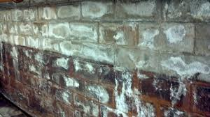 moldy basement awesome 54 white mold basement walls basement white mold in basement