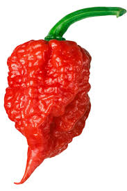 Carolina Reaper Hottest Pepper In The World All About It