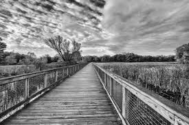 cool black and white photography with color. Plain Photography Fall Walk In Black And White Inside Cool And Photography With Color E