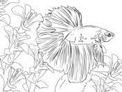 Betta Fish Coloring Page Coloring Is The Best Therapy Pinterest
