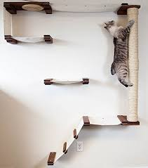 wall mounted cat shelving your cat will