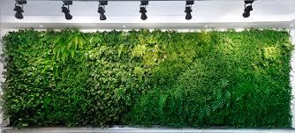optimising access to natural light living green wall
