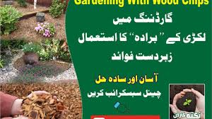 Kitchen Gardening Gardening With Wood Chips April 2017 Kitchen Gardening Urdu Hindko