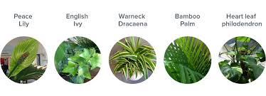 plants office garden green clean air indoor. ourplants2 plants office garden green clean air indoor