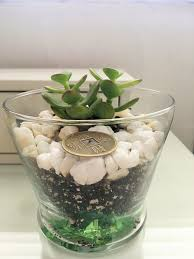 feng shui plant office. Why The Jade Plant Is Money Magnet In Feng Shui Office