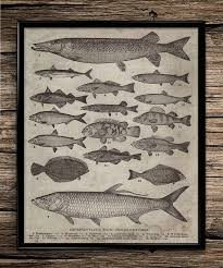 luxury office decorations men. perfect office vintage breeds of fish fishing poster hunting fisherman  print man cave decor home wall art in luxury office decorations men s