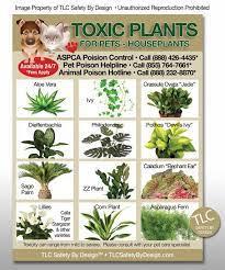 toxic plants for cats cat plants