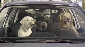 2018 subaru dog commercial. plain commercial the 2013 barkley dog family subaru commercial compilation on 2018 subaru dog commercial o