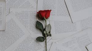 1366x768 wallpaper rose books texts