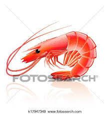 cooked shrimp clip art. Plain Clip Clip Art  Cooked Shrimp Isolated On White Fotosearch Search Clipart  Illustration Posters For Shrimp R