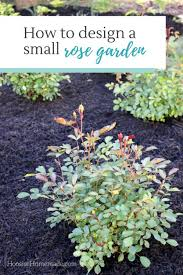 Small Picture How to Design a Small Rose Garden Rose Plants and Gardens
