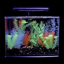 petco glofish. Unique Petco GloFish 3 Gallon Aquarium Kit With Petco Glofish 2