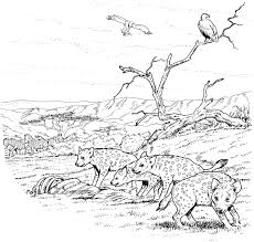 Cute aardwolf coloring page 20 pages of hyenas photosheep me