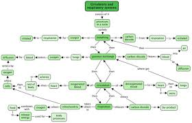 Gas Exchange Chart Gaseous Exchange In The Lungs Circulatory And Respiratory