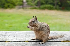 there are several tactics people have used to help keep squirrels off their property read below to see what tricks they ve tried and what we recommend as
